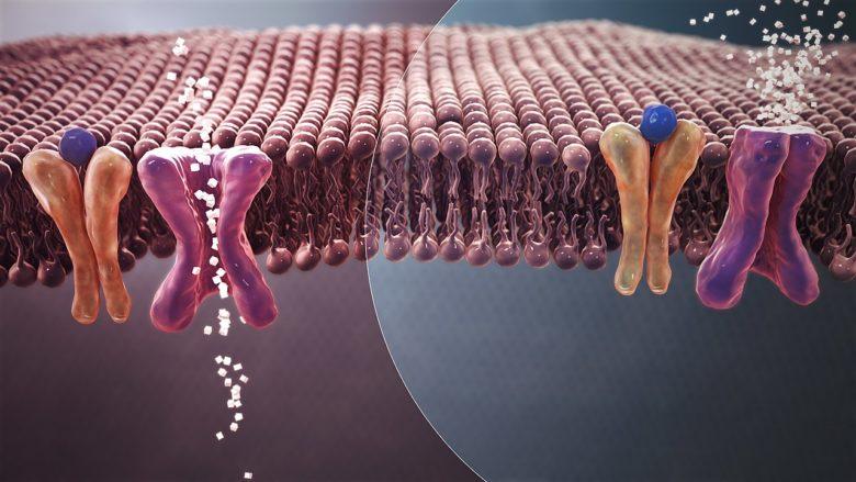 داء السكري من النوع 2 - فوائد الكركم لمن يعانون من داء السكري