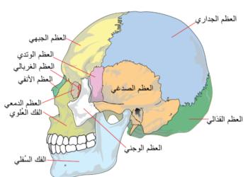 التهاب الفك الصدغي : عندما يكون التهاب المفاصل ألم في الفك !!